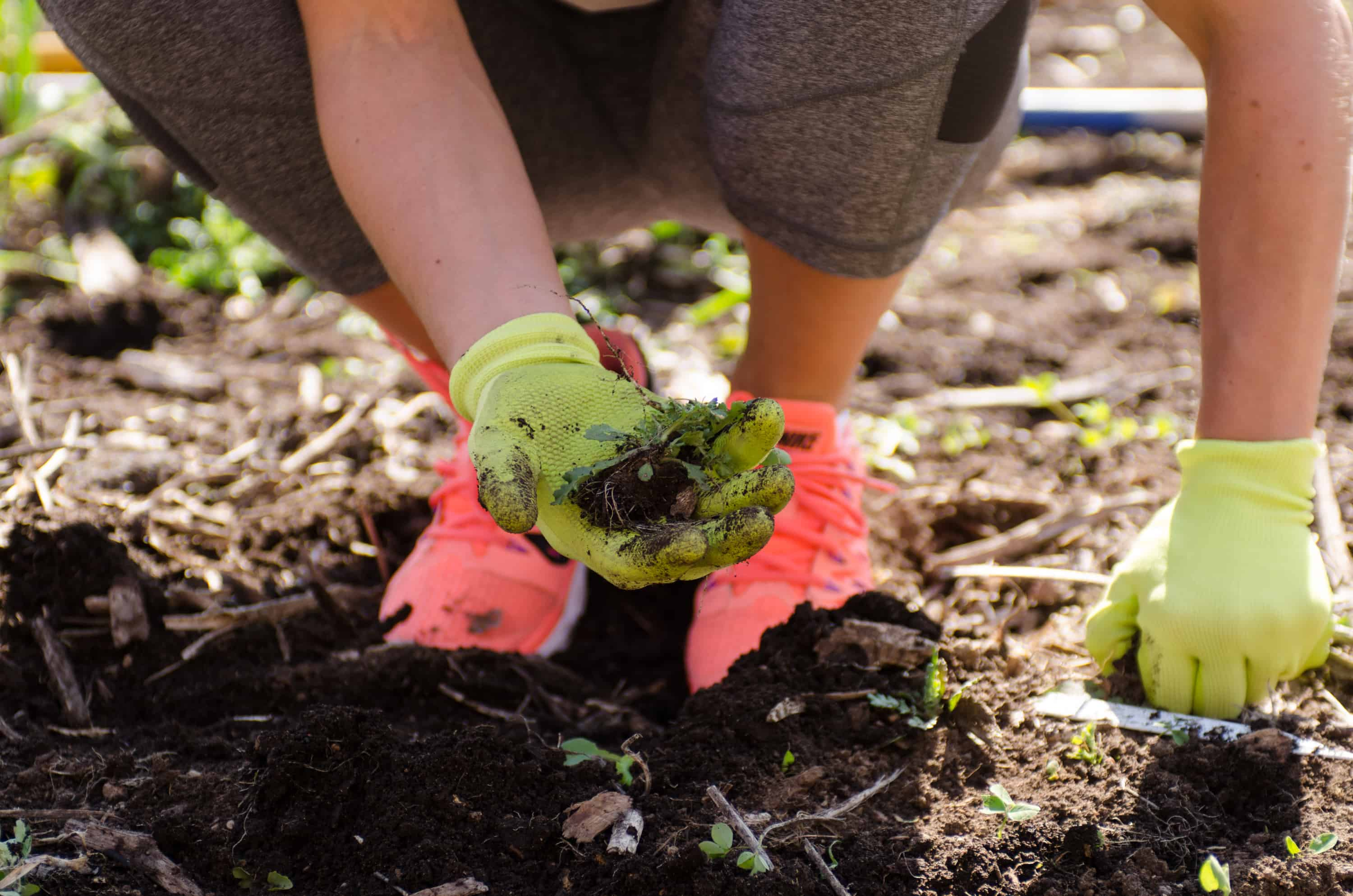A recap of the gardening initiative sponsored by Mrs. Meyer's Clean Day in partnership with the American Community Garden Association. Great products and a great cause!