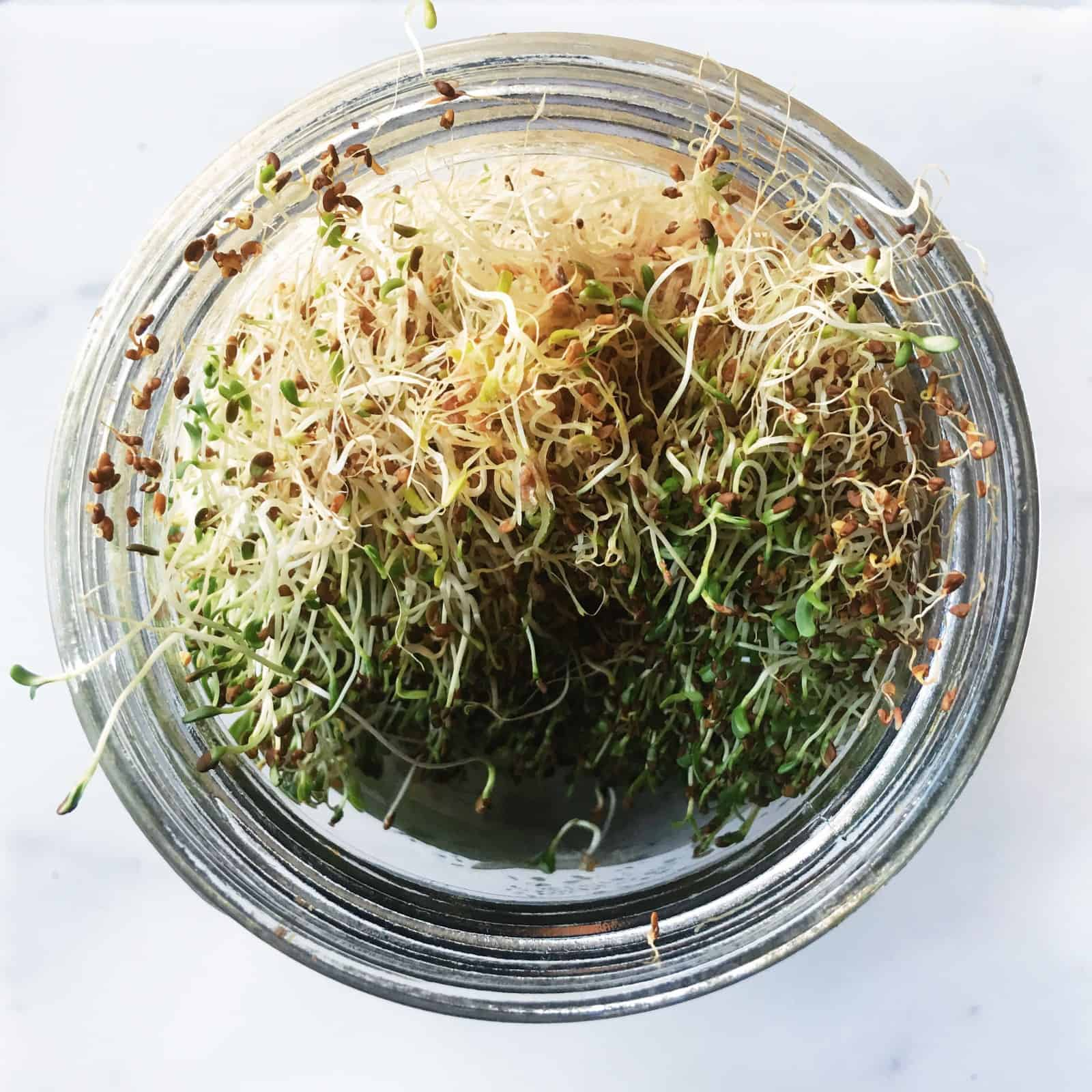 Growing Your Own Sprouts at Home