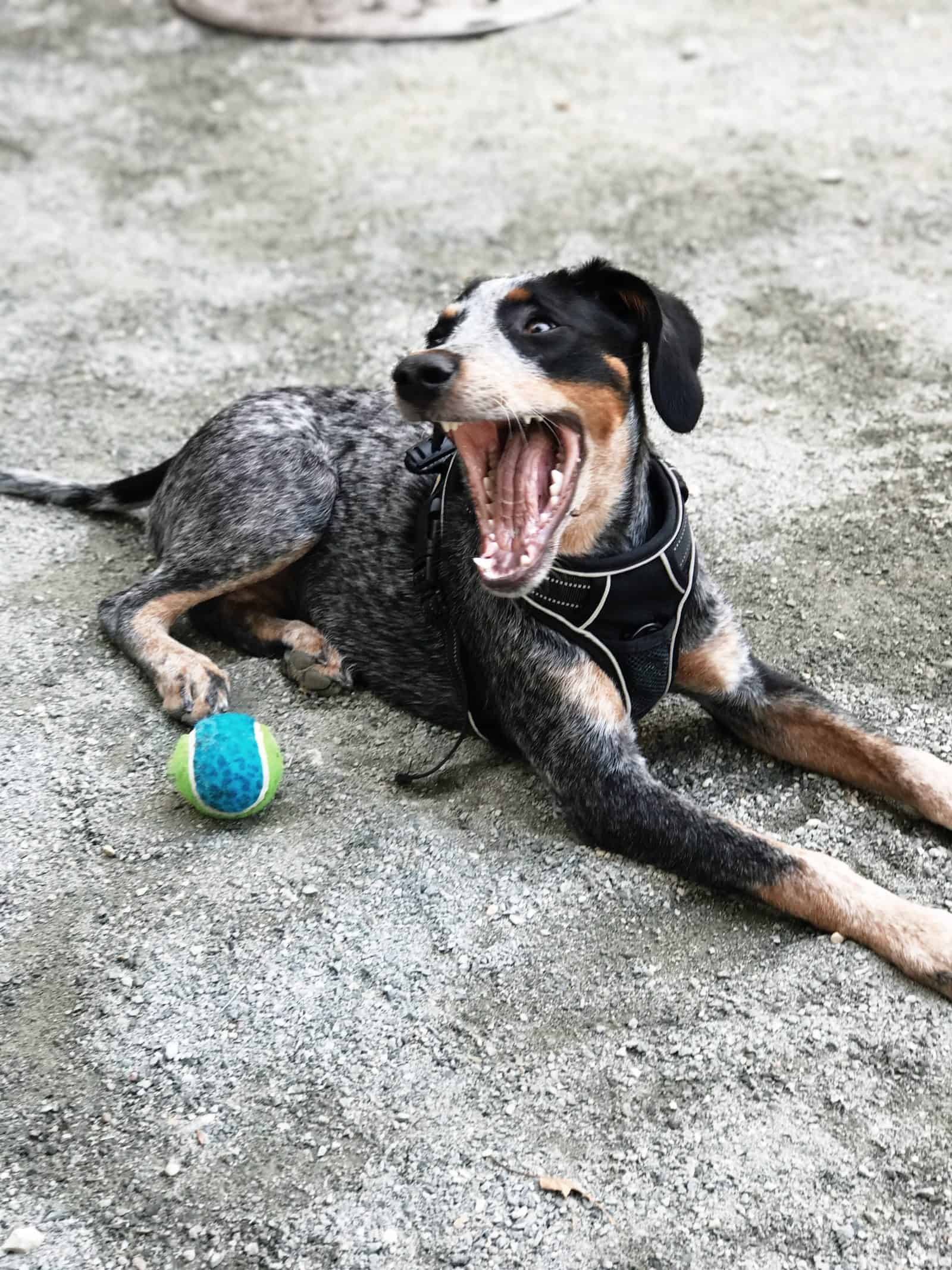Can Dogs Eat Pink Himalayan Salt