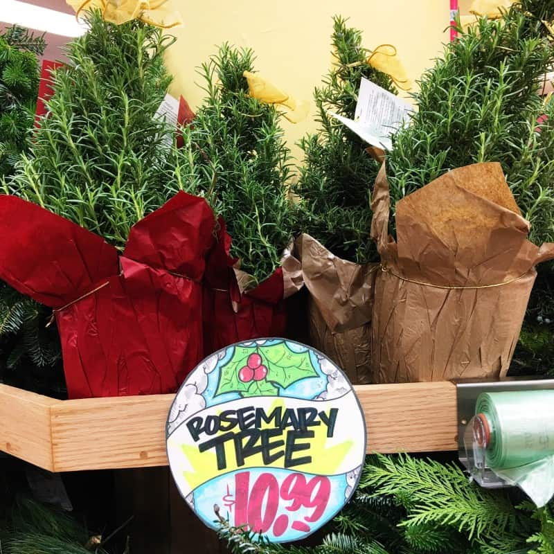 Trader Joe's rosemary Christmas tree