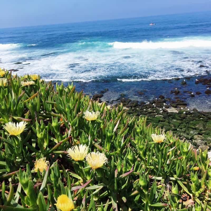 La Jolla Cove 4